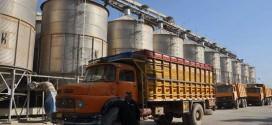 نجاح حملة الحصاد في النجف بتسويق أكثر من 100 ألف طن من الشلب