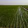 الزراعة: صدور قرار بمنع استيراد المحاصيل الممكن زراعتها محليًا